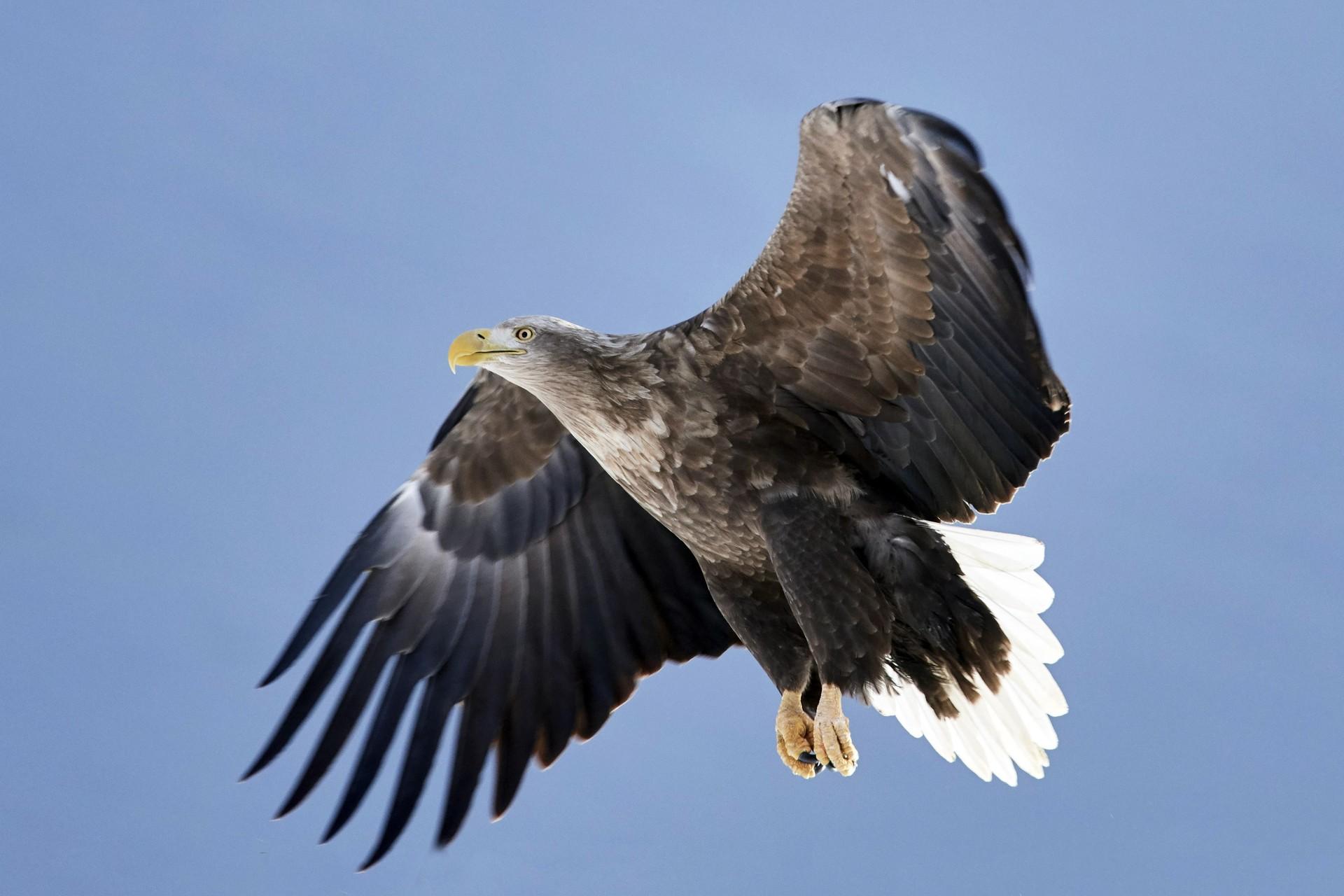 Ørnens Dag bød på ørne i regn og...