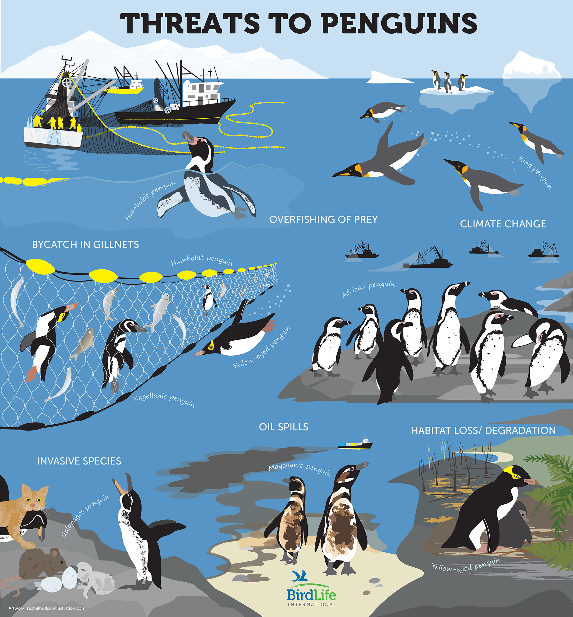 Threats to Penguins final rachelhudsonillustration